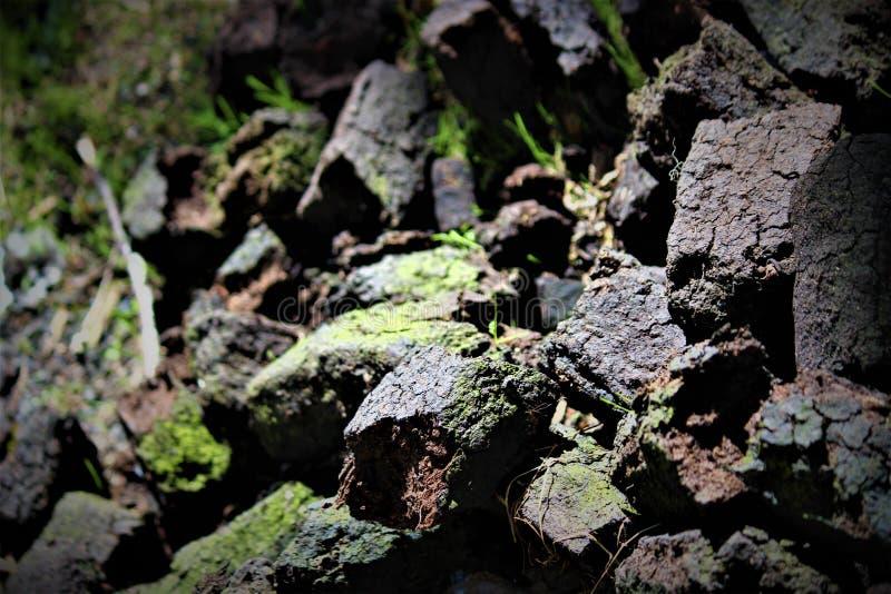 Iers die Gras voor Energie wordt gebruikt stock foto's