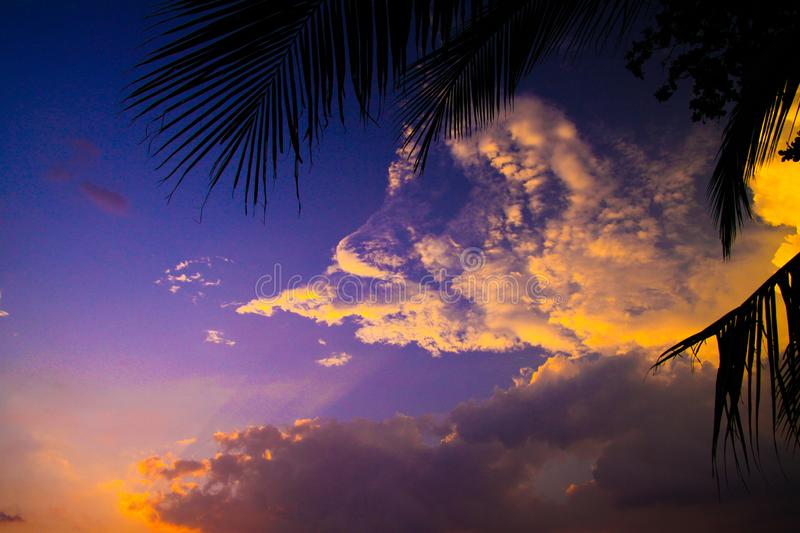 Iew beyond black silhouette of palm tree leaf on white cumulus clouds illuminated in yellow orange color during sunset - Ko Lanta royalty free stock photos