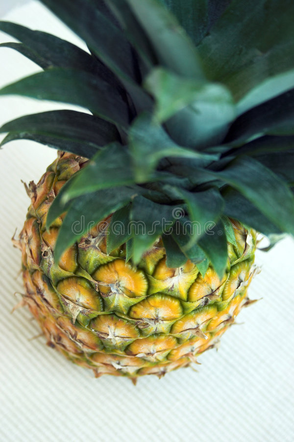 Download If You Like Pina Colada... Royalty Free Stock Photos - Image: 557148