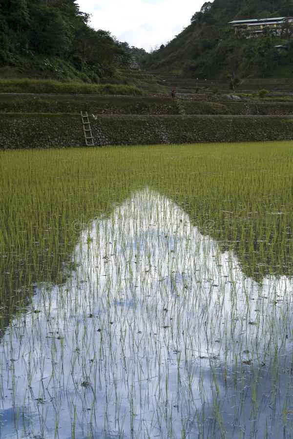 Download Ifugao Rice Terraces Banaue Philippines Stock Photo - Image: 13677190