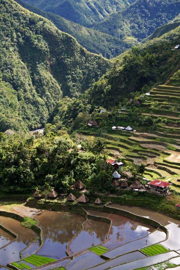 ifugaophilippines rice terrasserar byn arkivfoton