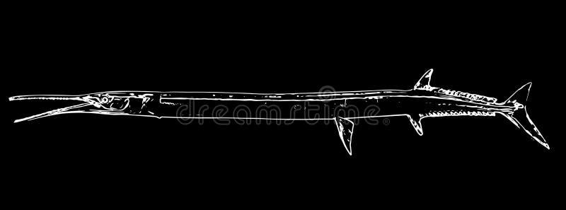 Igły garfish rybi połów na czarnym tle ilustracja wektor