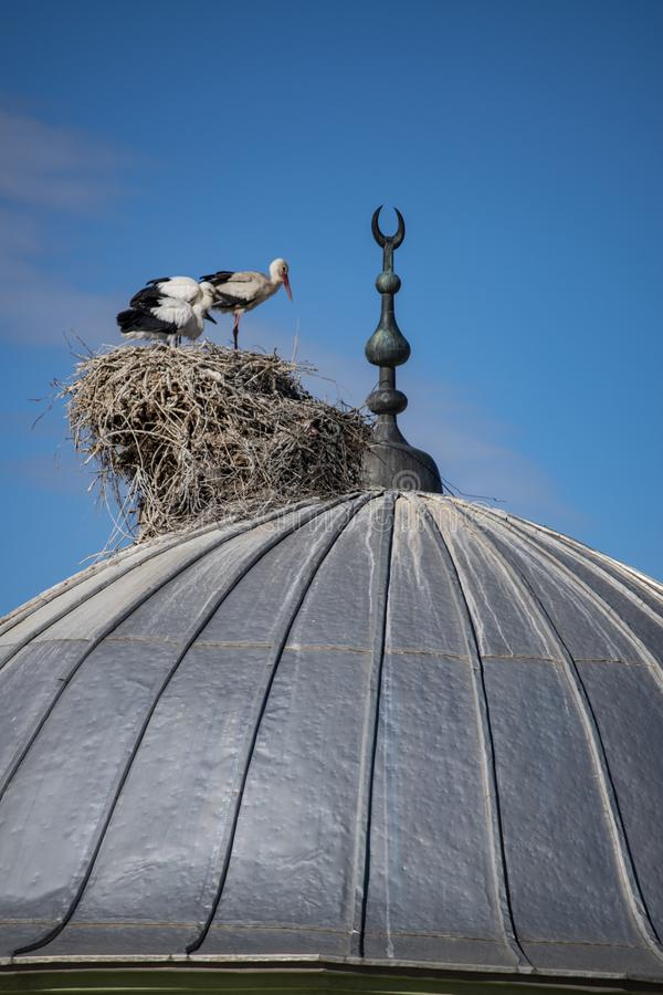 Igdir, cigüeña, jerarquía, huevo, bóveda, mezquita, alminar, Islam, pájaro, birdwatching, Turquía, Medio Oriente, paisaje, visión fotos de archivo libres de regalías