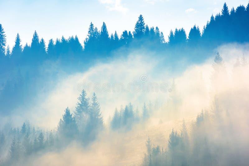 Iglaści drzewa w mgle na wzgórzu obraz royalty free