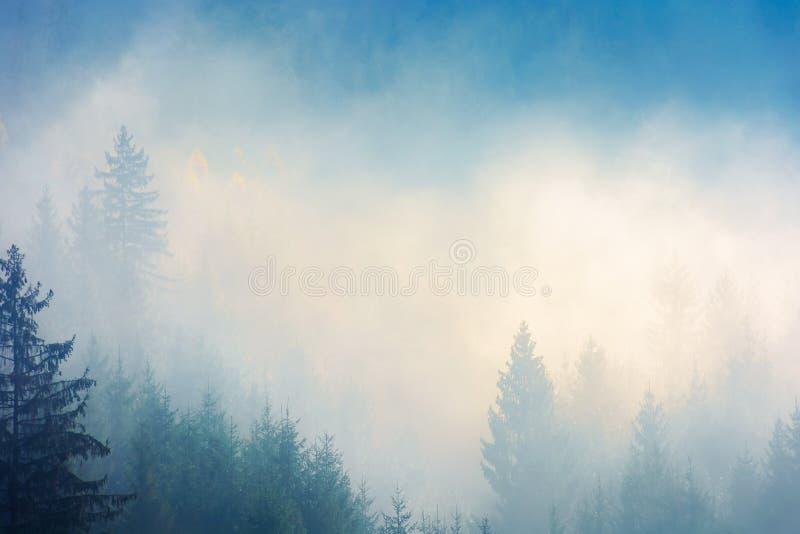 Iglaści drzewa w mgle na wzgórzu obraz stock