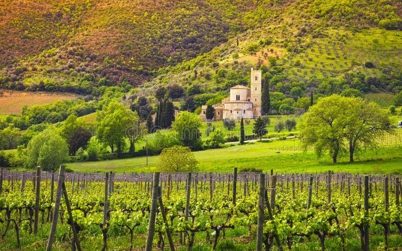 Iglesia, viñedos y olivo de Sant Antimo Montalcino Toscana, Italia imagen de archivo libre de regalías