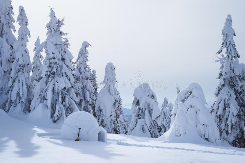 Iglu do esquimó na floresta nevado foto de stock royalty free