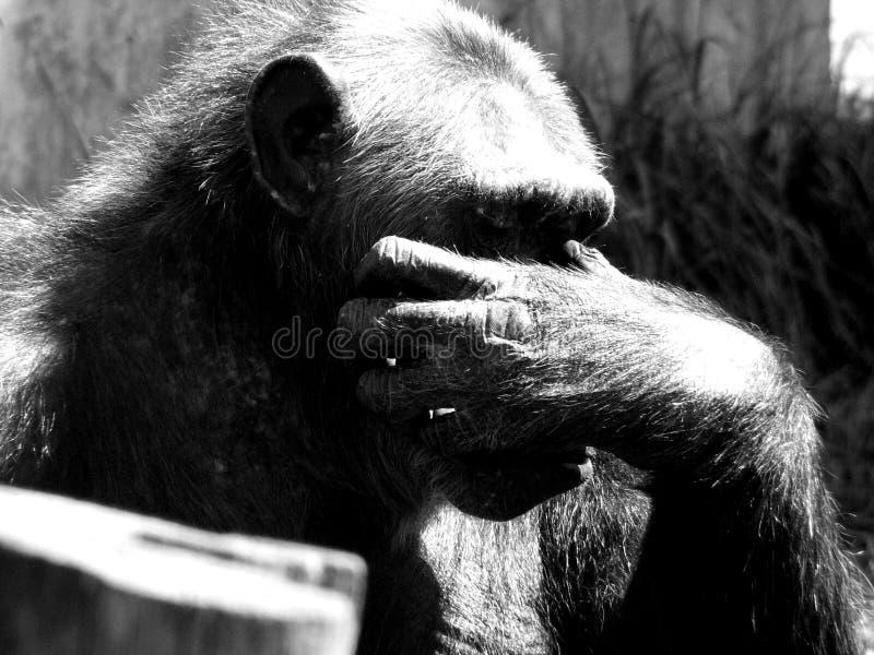 Download Ignoruje mnie małpi zdjęcie stock. Obraz złożonej z myśliciel - 131574