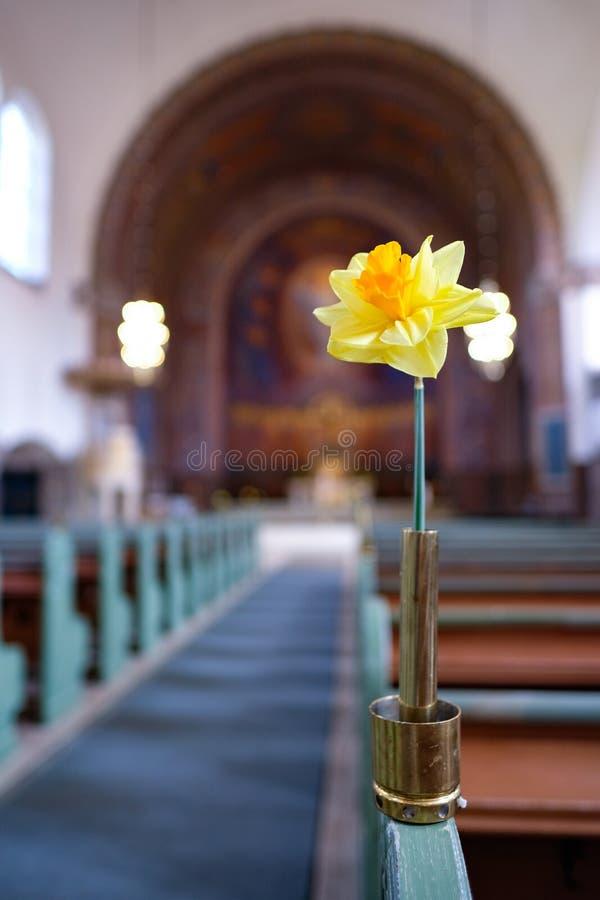 igreja da flor do narciso amarelo fotos de stock royalty free