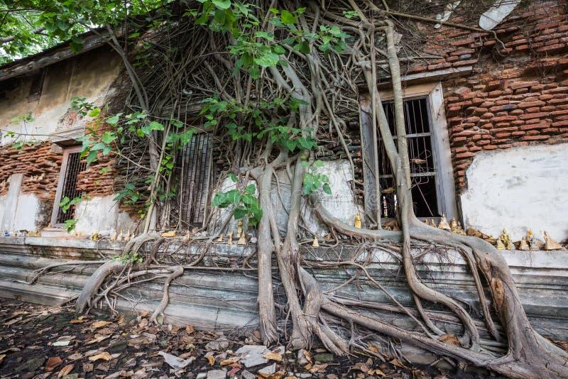 Igreja dilapidada em Wat Rat Bamrung Wat Ngon Kai - Samut Sakhon, Tailândia fotos de stock