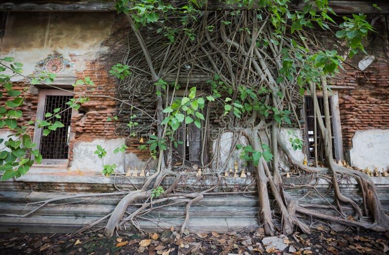 Igreja dilapidada em Wat Rat Bamrung Wat Ngon Kai - Samut Sakhon, Tailândia foto de stock