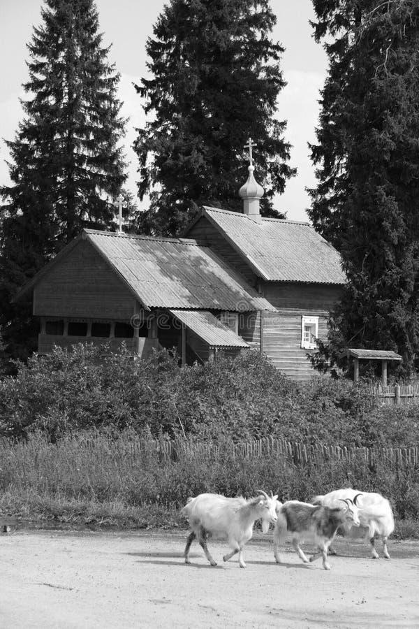Igreja e cabras de madeira foto de stock