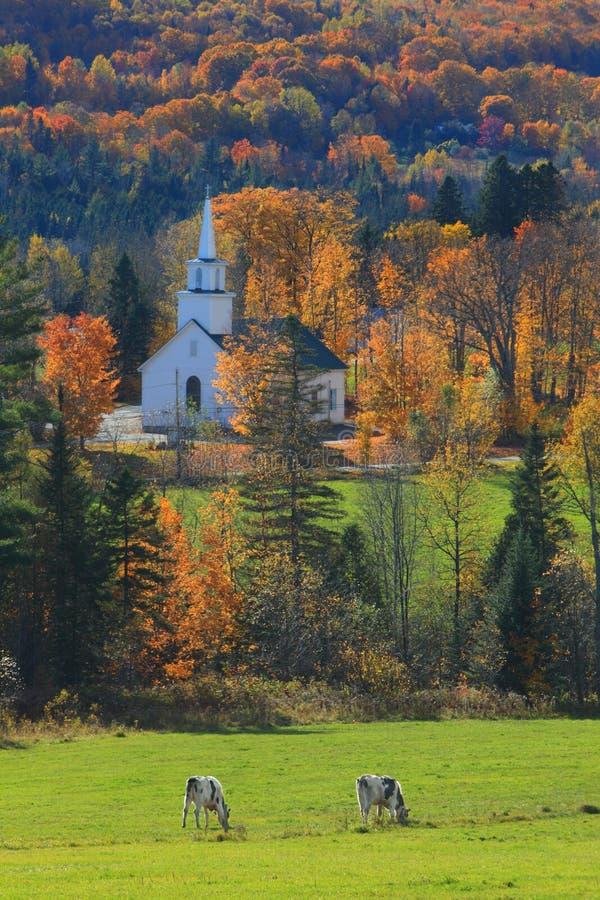 Igreja e vacas de Vermont fotografia de stock