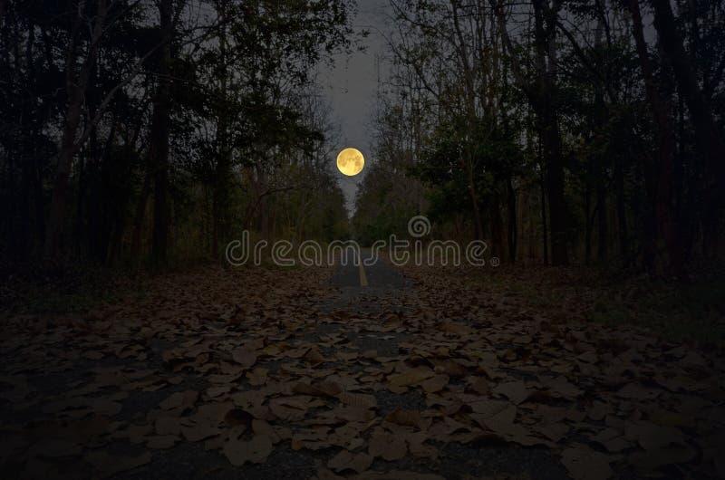 Igualación de la Luna Llena grande sobre el camino a través del bosque solo imagen de archivo
