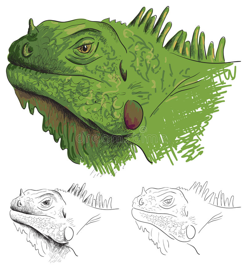 Download Iguana stock vector. Image of freehand, line, sketch - 23894198