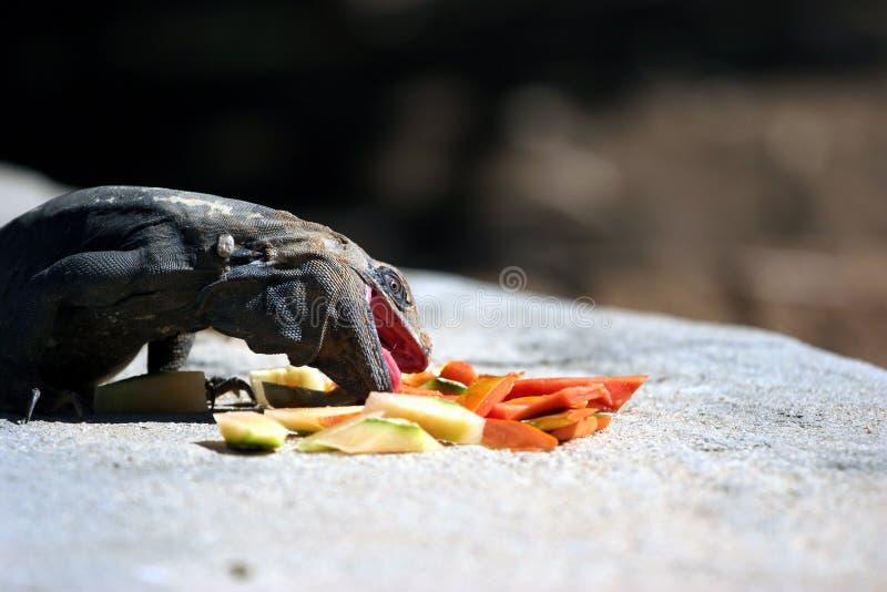 Download Iguana stock photo. Image of papaya, predator, prey, lizards - 461602