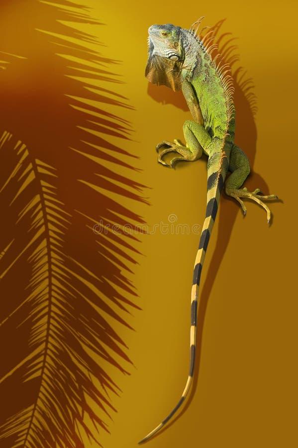 Download Iguana stock photo. Image of large, palm, frond, iguana - 8085144