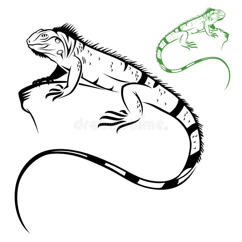 Iguana aislada libre illustration