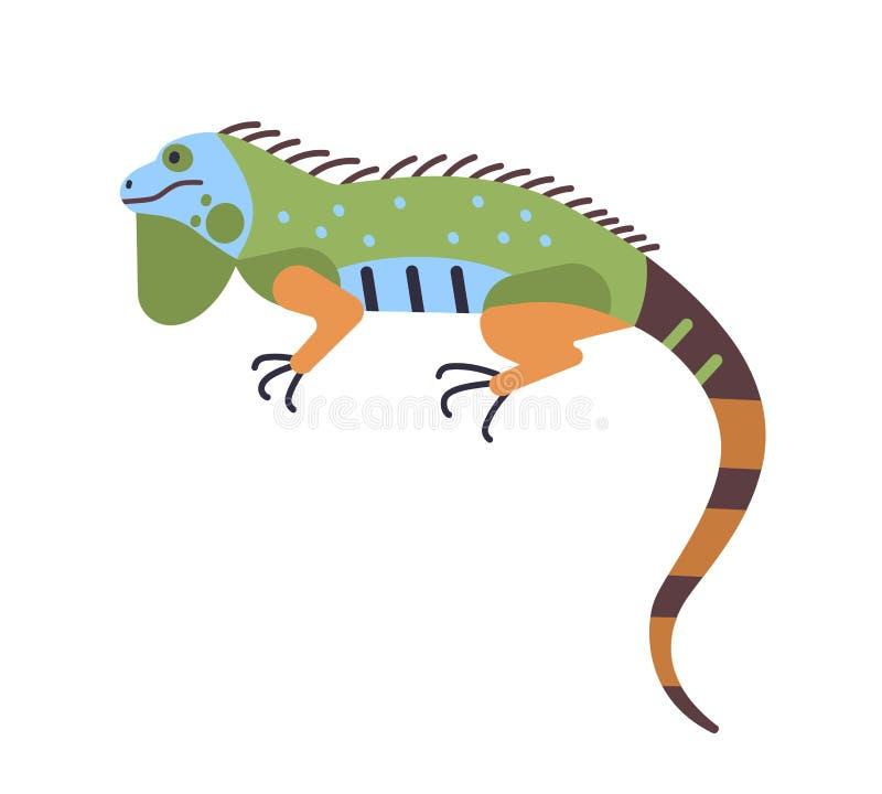 Iguana colorata luminosa isolata su fondo bianco Animale esotico carnivoro adorabile Bello rettile predatore selvaggio illustrazione vettoriale