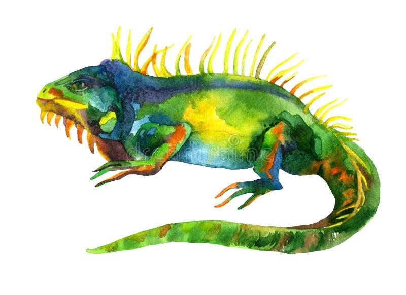 Iguana da aquarela isolada no fundo branco ilustração stock