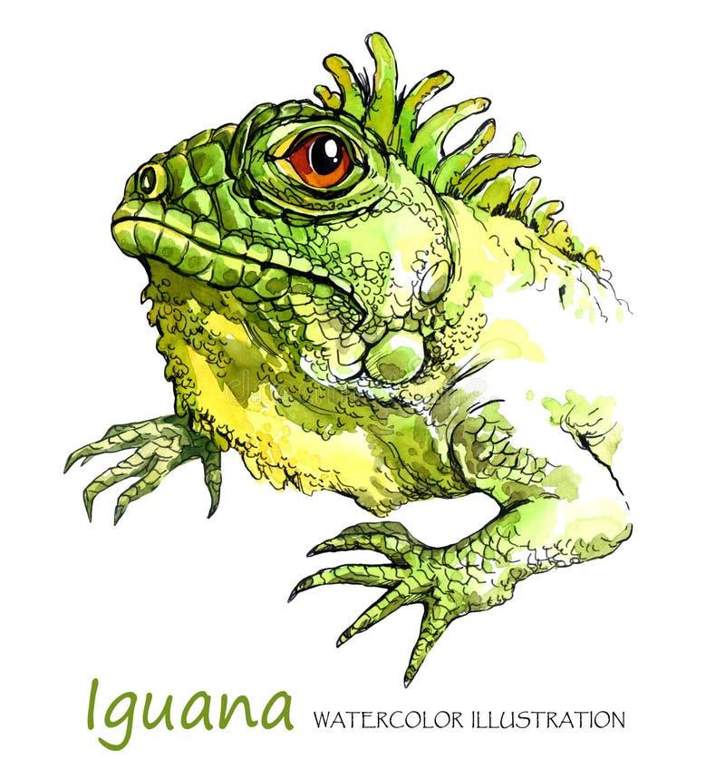 Iguana da aquarela no fundo branco Animal exótico ilustração do vetor