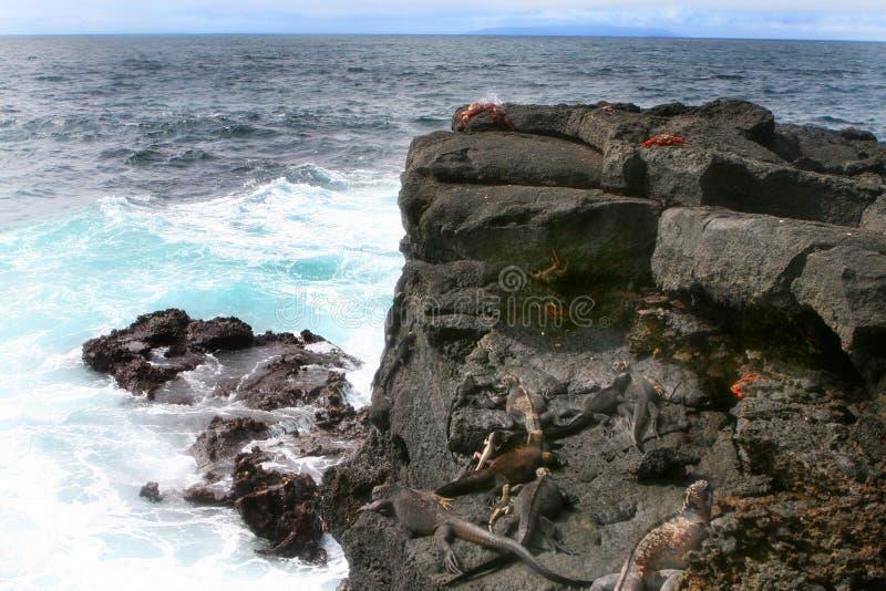 Iguana e caranguejos marinhos de Sally Lightfoot imagens de stock royalty free
