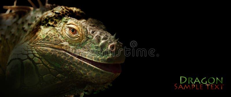 Iguana. Green iguana on the black background royalty free stock images
