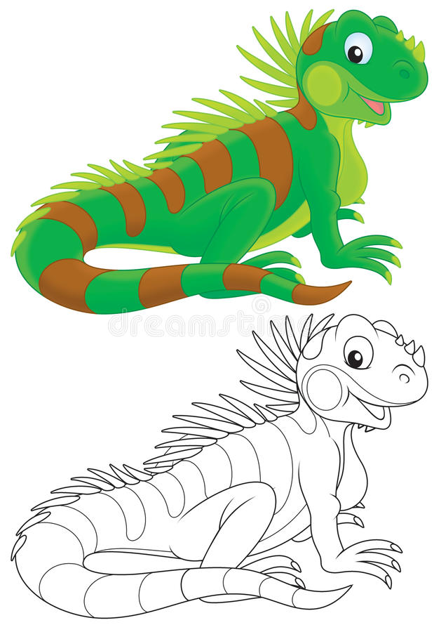 Iguana. Green iguana, color and black-and-white illustrations on a white background stock illustration
