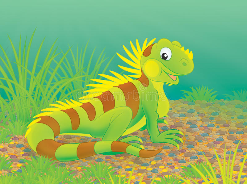 Iguana. Green striped iguana walking in grass royalty free illustration