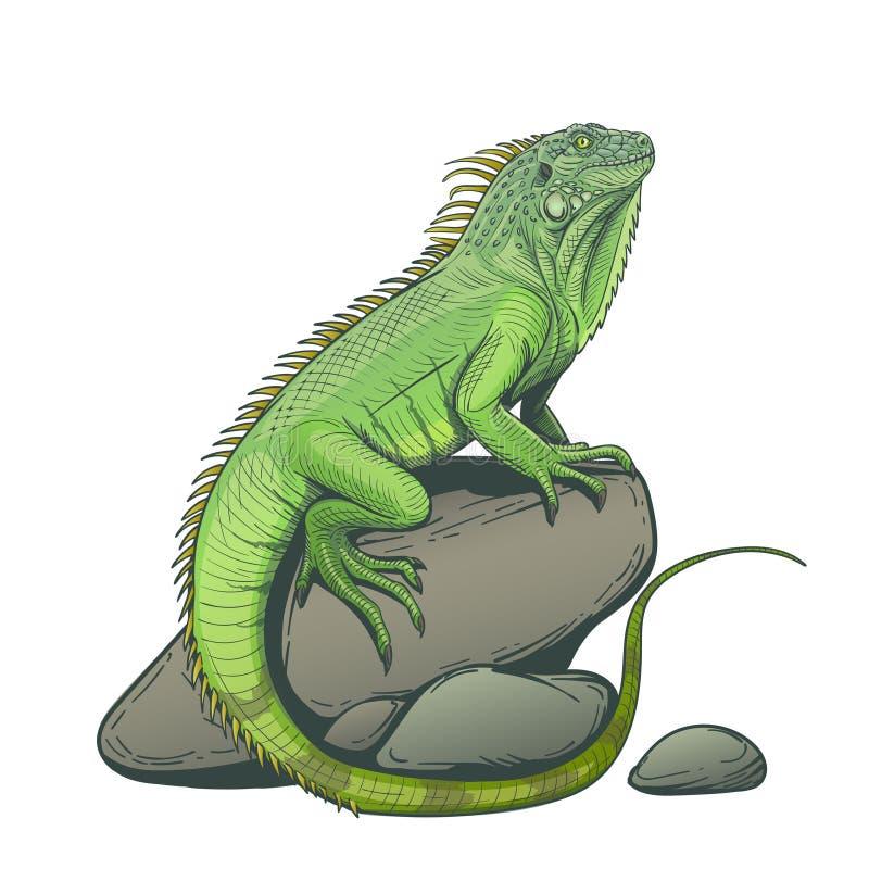 Iguana lizard on a stone illustration stock image