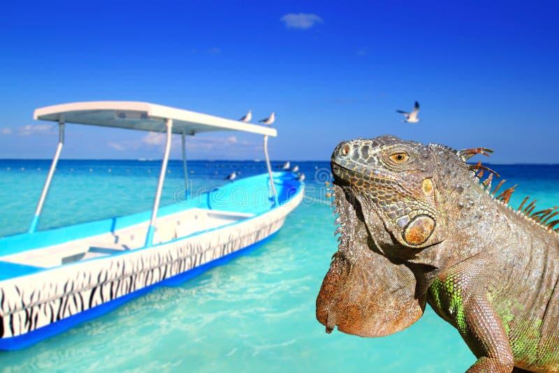 Iguana messicana in spiaggia tropicale caraibica fotografia stock