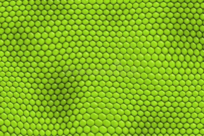 Iguana - piel del reptil ilustración del vector