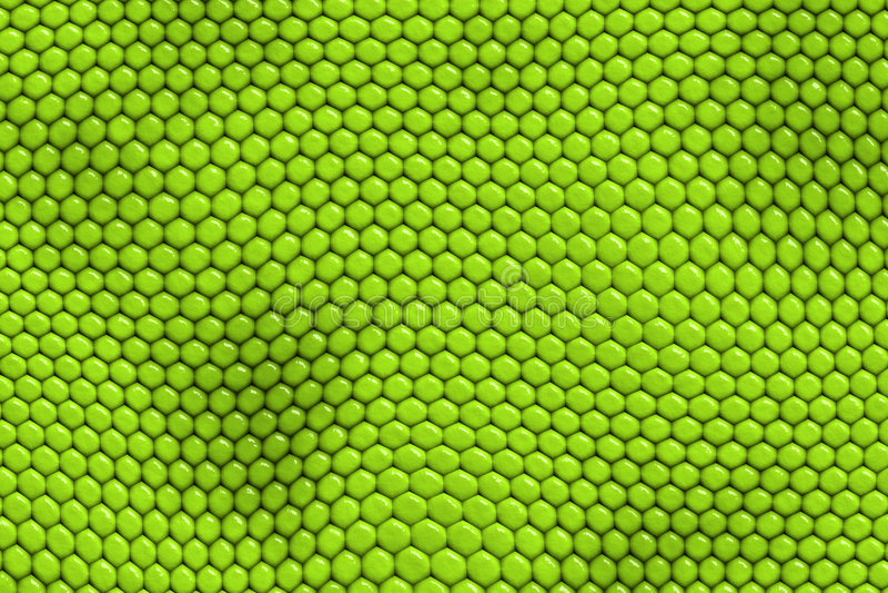 iguana reptile skin διανυσματική απεικόνιση