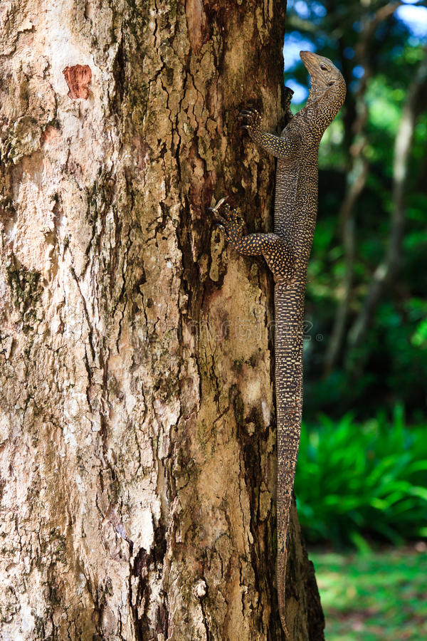 Download Iguana Reptile On A Tree Trunk Stock Photo - Image: 19153866