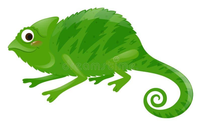 Iguana selvagem no fundo branco ilustração royalty free