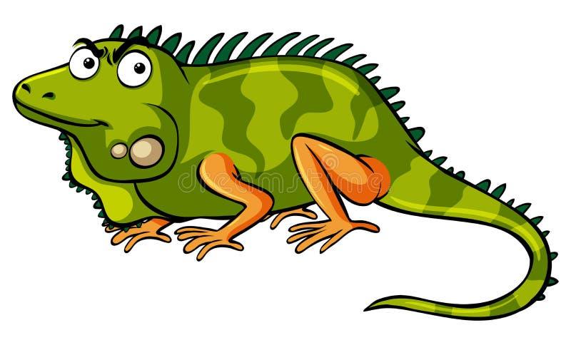 Iguana verde no fundo branco ilustração do vetor