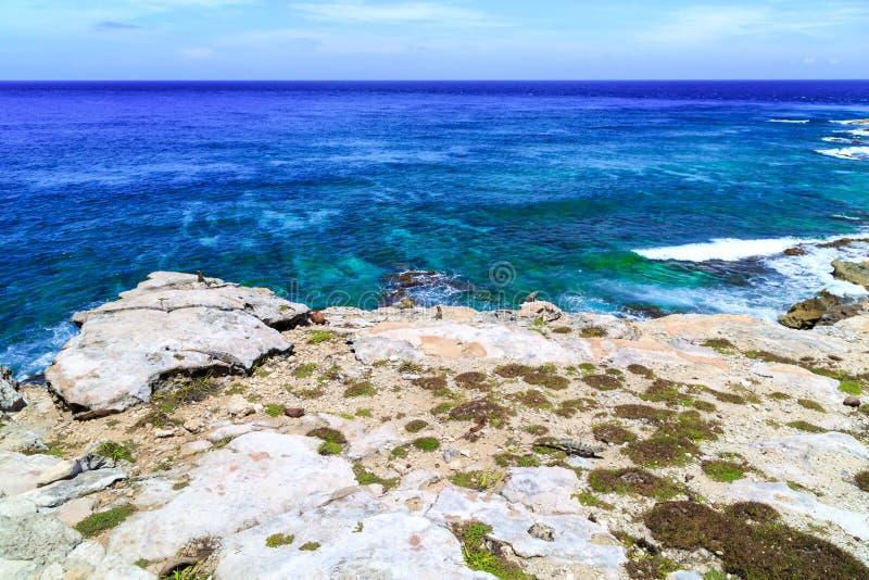iguanas Del mar dei Caraibi Isla Mujeres mexico fotografie stock