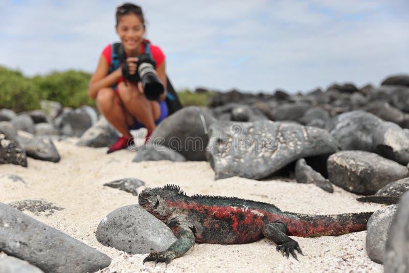 Iguane de Noël de Galapagos et photographe de touristes de faune prenant la photo photographie stock libre de droits