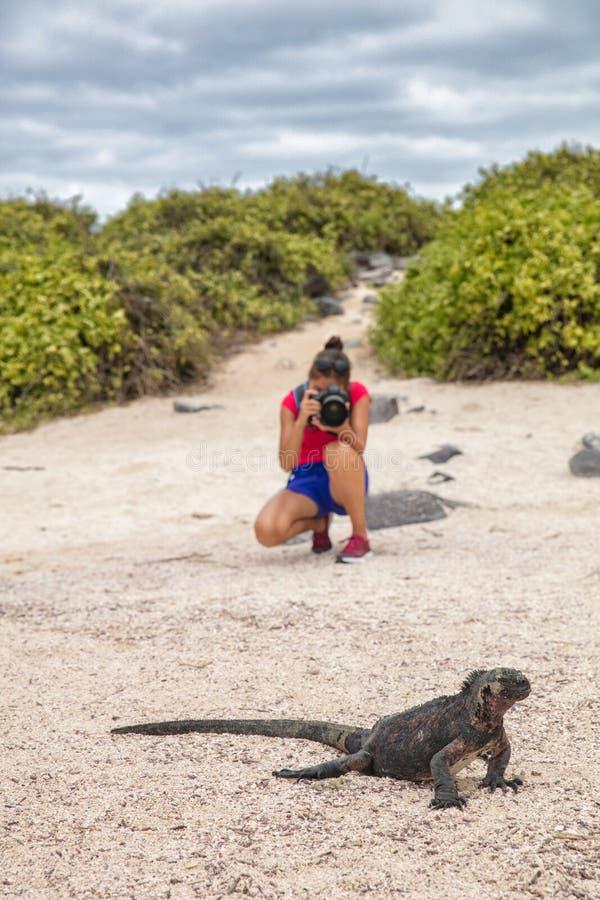 Iguane de Noël de Galapagos et photographe de touristes de faune prenant la photo image libre de droits