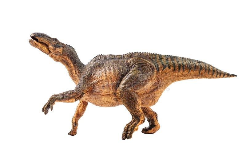 Iguanodon, δεινόσαυρος στο άσπρο υπόβαθρο στοκ εικόνες