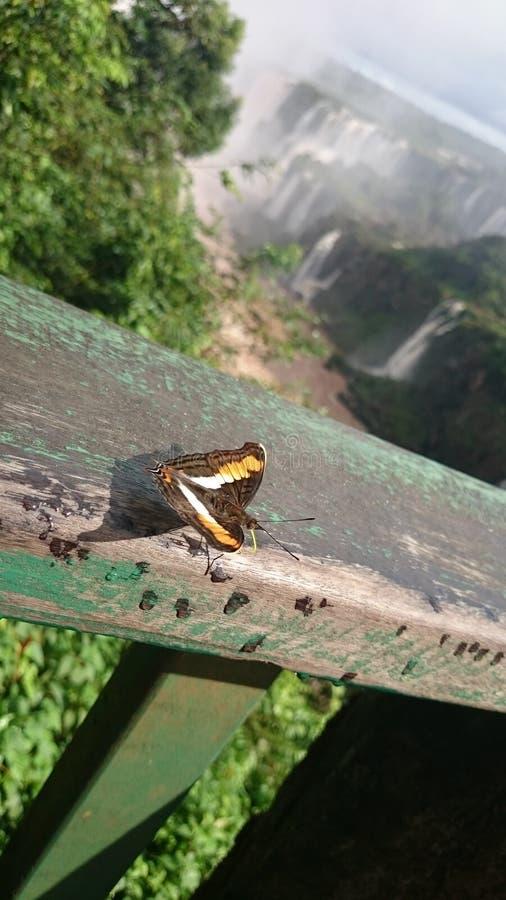 Iguassu fällt Schmetterling lizenzfreies stockbild