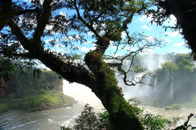 Iguazu valt - bekijk van de kant van Argentinië stock afbeeldingen