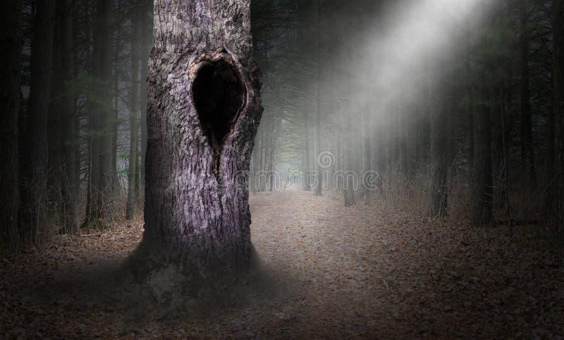 Ihåligt träd mörka Forest Background som är overklig arkivbilder