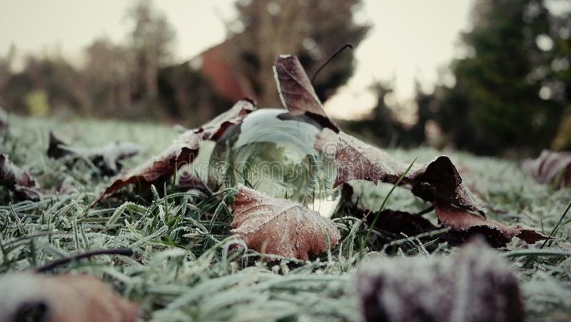In Ihrem eigenen hinteren Garten 4 lizenzfreies stockfoto