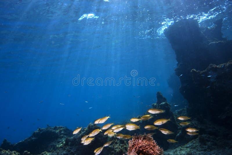 ii水下的横向 免版税图库摄影