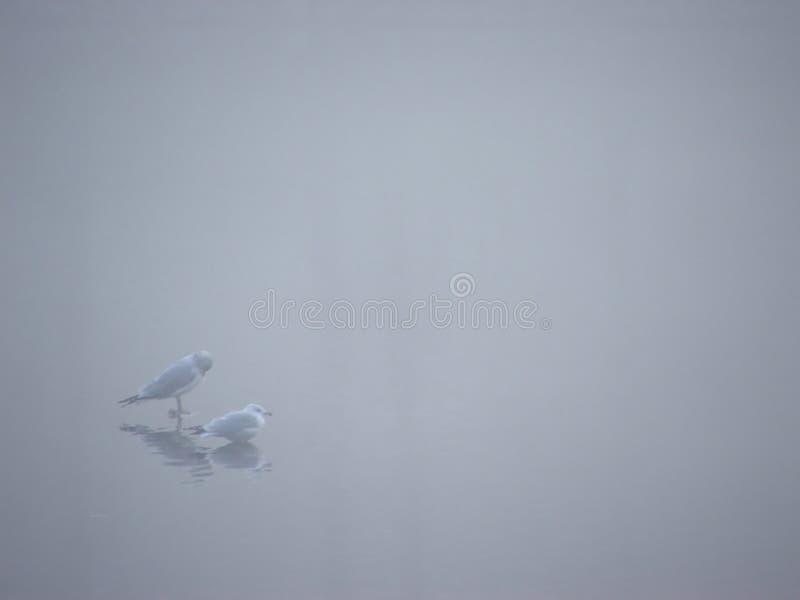 iii ptaków mgła. zdjęcie stock