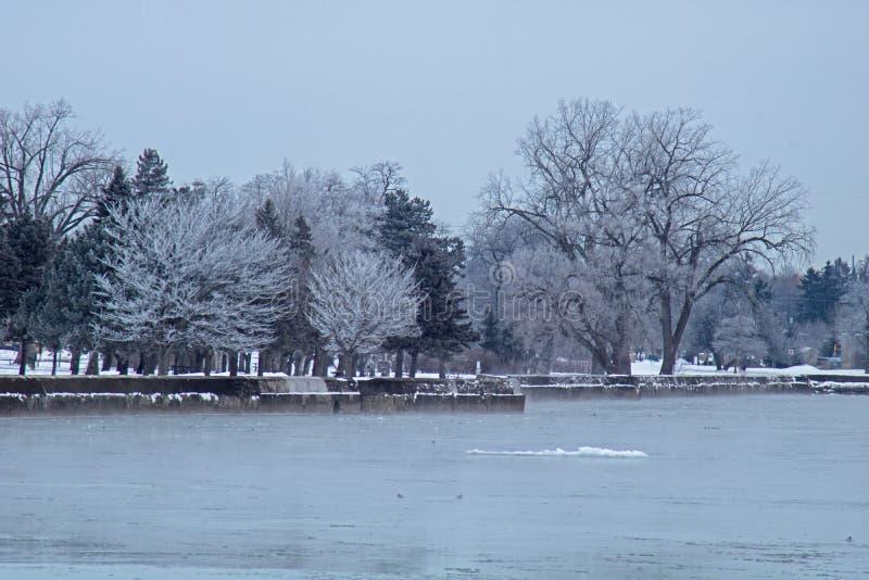 Ijs Behandelde Bomenlijn de Kust van Meer Erie royalty-vrije stock fotografie
