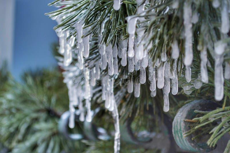 ijs op boom royalty-vrije stock afbeeldingen