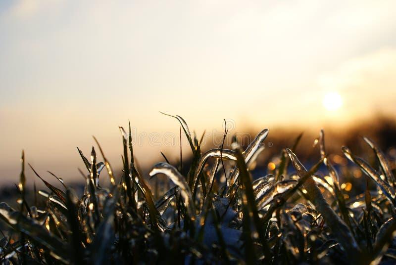 Ijsaard/gras met ijs wordt behandeld dat stock foto's