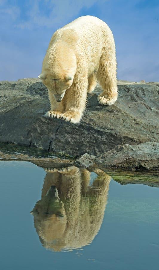 Ijsbeer die zijn gedachtengang bekijken royalty-vrije stock afbeeldingen